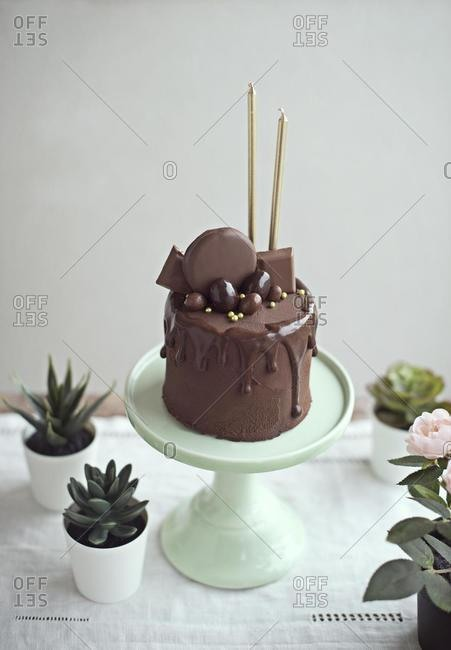 Chocolate cake with golden candles on a cake stand next to succulent plants