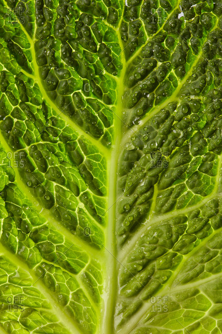 Vertical natural macro background from freshly picked natural organic salad leaf with droplets of water. Vegan detox food.