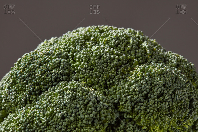 Natural home grown broccoli sprouts, healthy raw plant for cooking vegetarian food on a gray background, copy space. Close-up view. Vegan detox food.