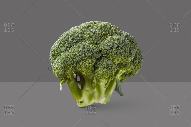 Dieting vegetable healthy organic broccoli plant on a duotone grey background with copy space. Vegetarian detox food.