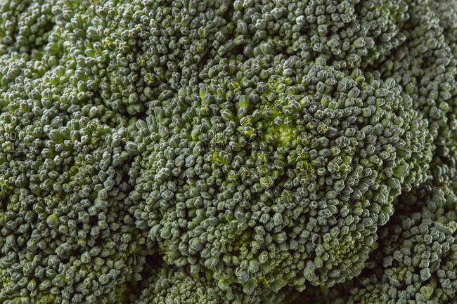 Homegrown healthy natural raw broccoli vegetable background, surface of broccoli inflorescences. Vegetarian healthy food concept.