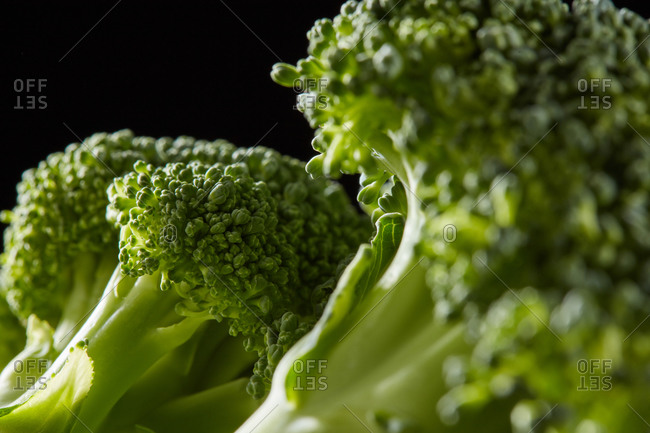 Home grown natural broccoli sprouts, healthy raw plant for cooking vegetarian food on a black background, copy space. Close-up view. Dieting healthy food.