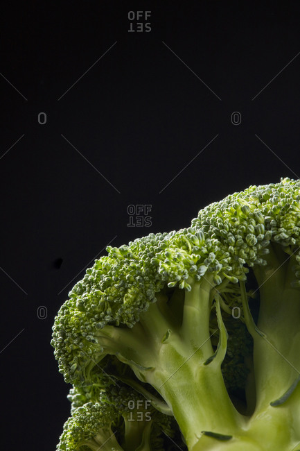 Dieting raw vegetarian food. Home grown natural organic broccoli plant on a black background, copy space. Vegan detox food.
