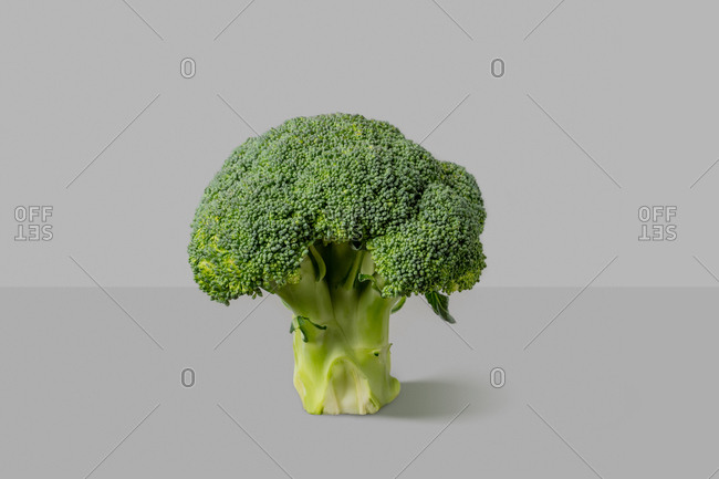 Dieting vegetable healthy organic broccoli plant on a duotone grey background with copy space. Vegan detox food.