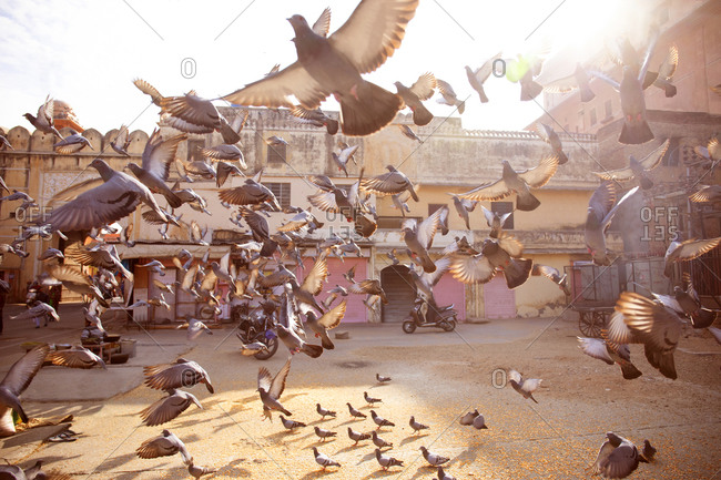 Jaipur, India - January 3, 2020: The Pink City, town square where people can buy bird seed to feed pigeons