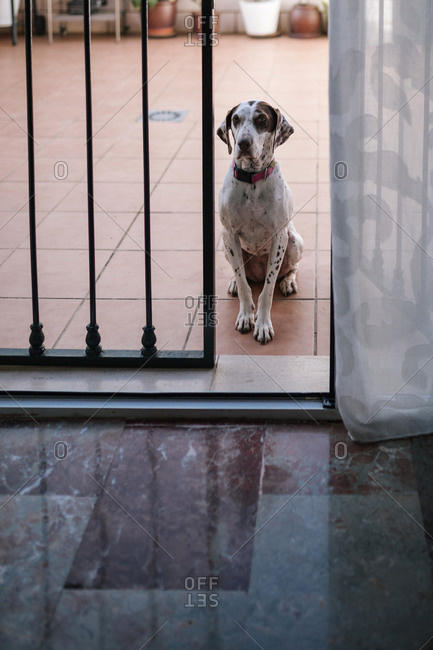 Dog sitting outside a house looking at camera