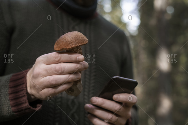 Hands holding mushroom and cell phone
