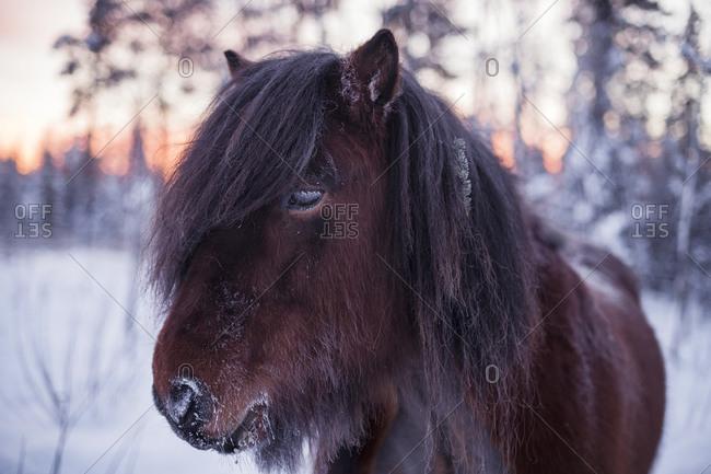 Horse at winter