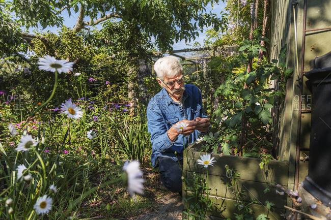 Man in summer garden
