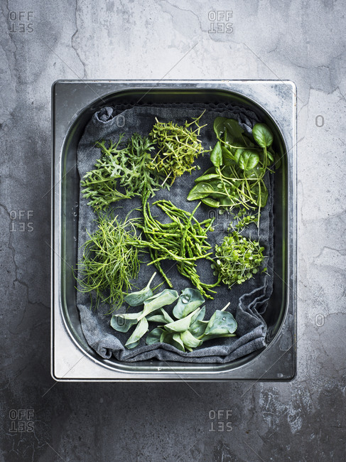 Fresh herbs in stainless steel container