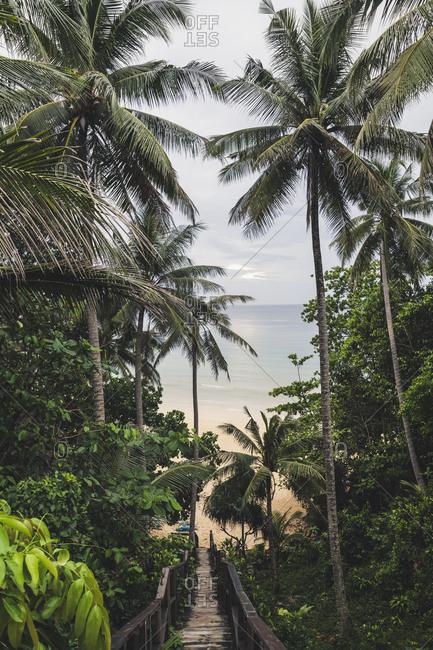 Path through palm tees towards Nia Thon Beach- Phuket- Thailand