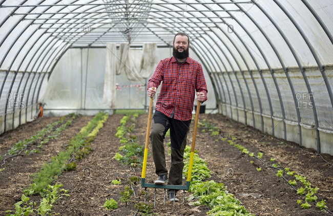 Man growing lettuce in a greenhouse- using a digging fork