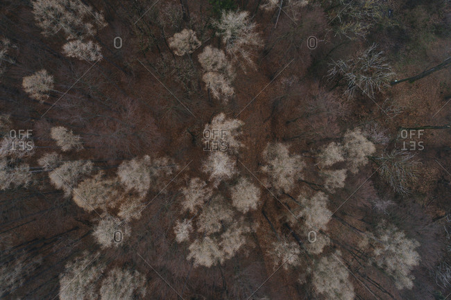 Austria- Lower Austria- Aerial view of forest in Winter