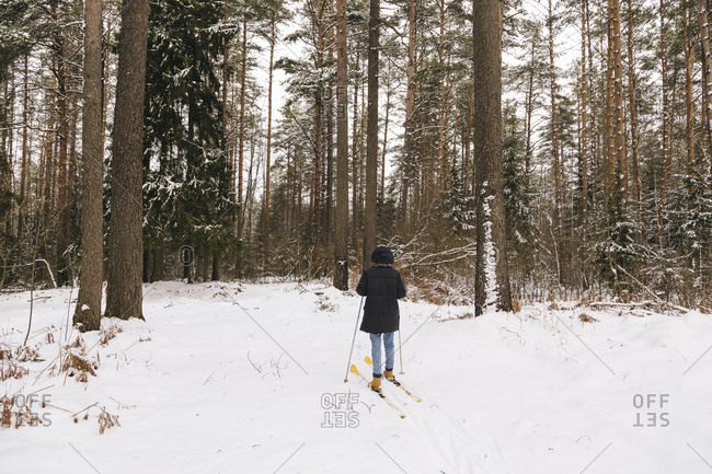 Back view of woman on skis in winter forest