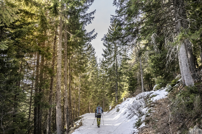Man on snowshoeing trip in a forest- Lombardy- Valtellina- Italy