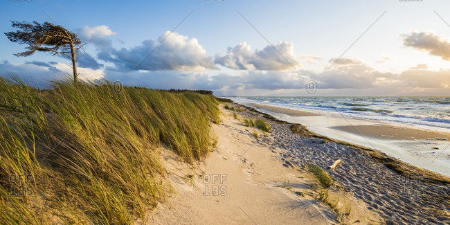 Germany- Mecklenburg-Western Pomerania- Prerow- Grassy coastal beach in Western Pomerania Lagoon Area National Park
