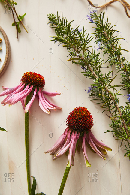 Coneflower (echinacea) and rosemary on a wooden table