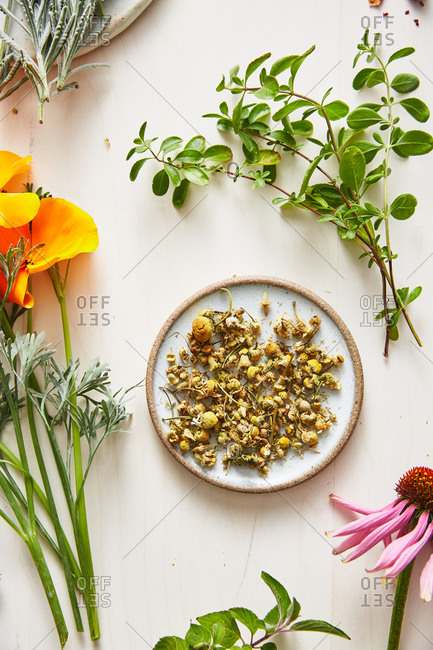 Dried chamomile on a plate surrounded by other herbs