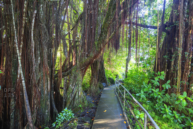 Akaka Falls hiking trail, Big Island, Hawaii, United States of America, North America