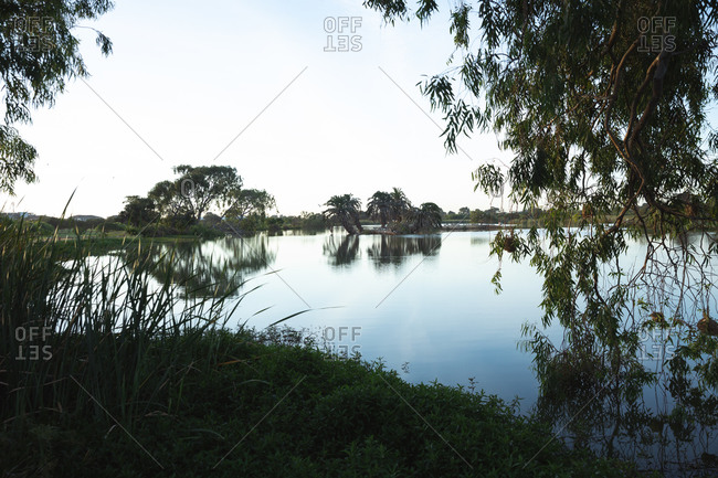 Magnificent landscape of a pond on a golf course, in the morning, with trees falling into water