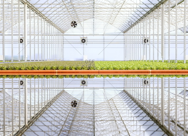 Hydroponic farm reflecting in water in Gavorrano, Tuscany, Italy