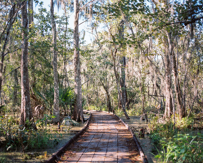 Path leading through forest in Louisiana