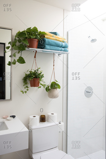 Two green plants hanging from shelf above toilet