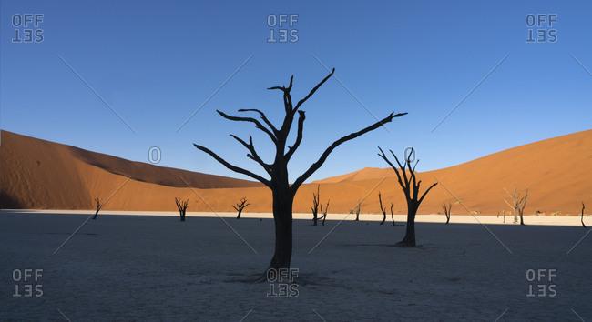 Morning light on acacia tree skeletons of Deadvlei-Sossusvlei, Namibia