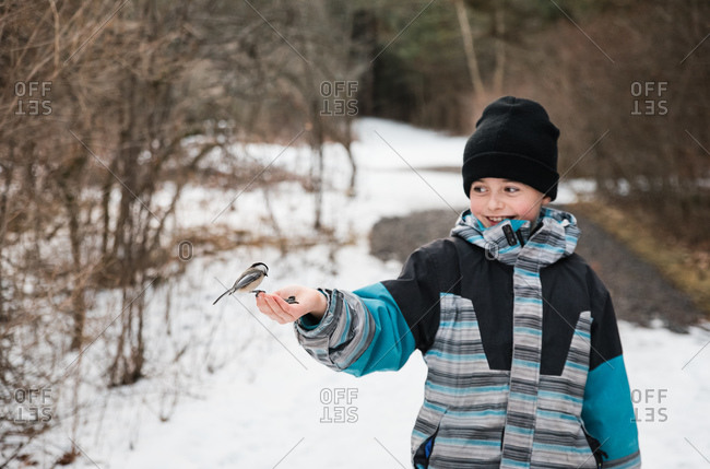 Young boy feeding a chickadee bird from his hand on a winter day.