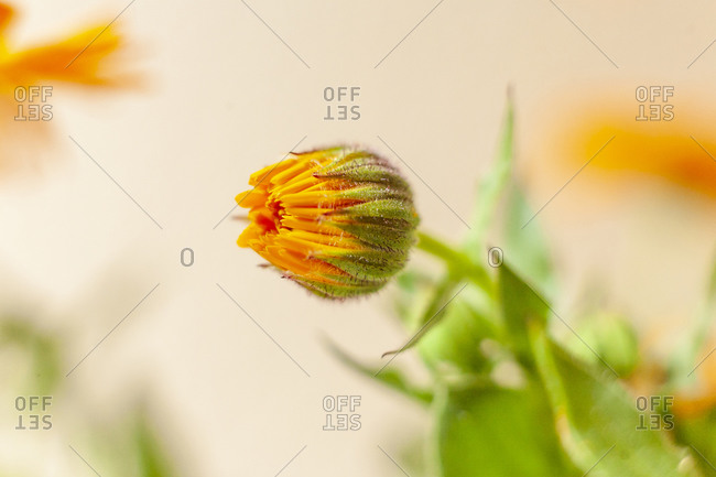 Flower Bud and Leaves against a Bright Background