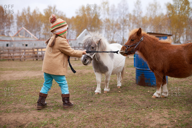 Girl With Ponies On Horse Farm