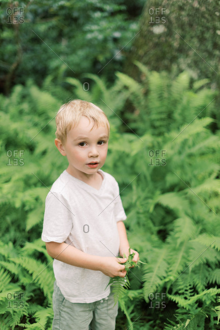 Little boy amidst the fern in the woods.