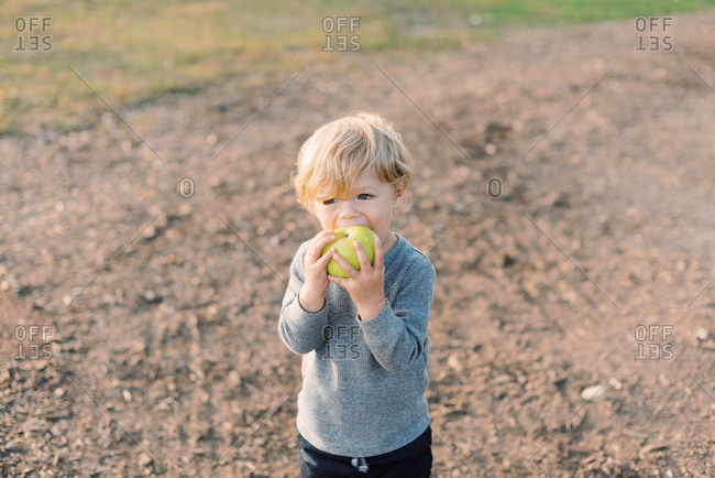 Little boy happily munching on his self picked apple.