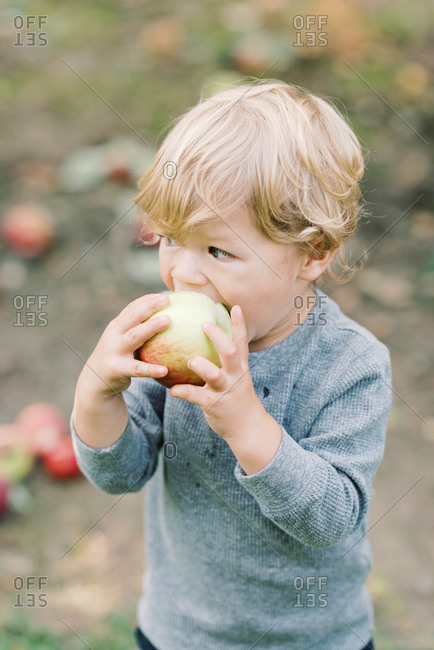 Little boy eating an apple in the middle of an apple orchard.
