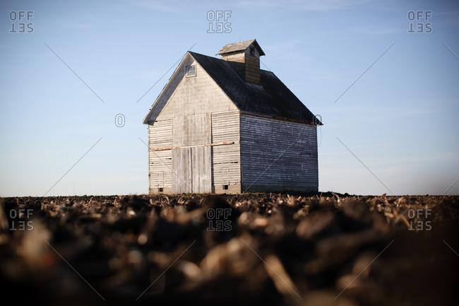 Lone barn in a cornfield