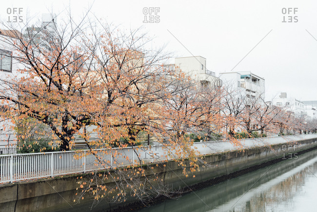 Autumn leaves on the riverside in East Tokyo