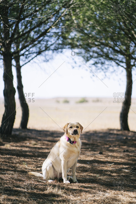 Dog sitting on meadow in a park