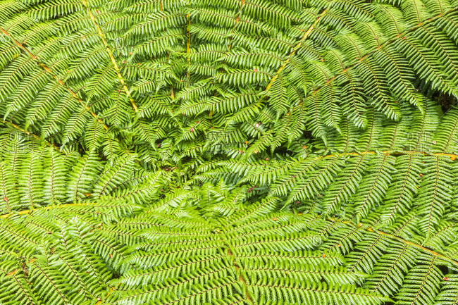 New Zealand- Oceania- South Island- Southland- Fiordland National Park- Close-up of fern leaves