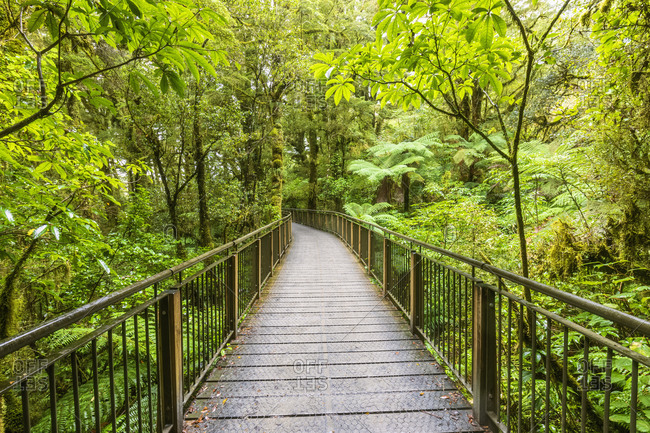 New Zealand- Oceania- South Island- Southland- Fiordland National Park- Boardwalk The Chasm Walk