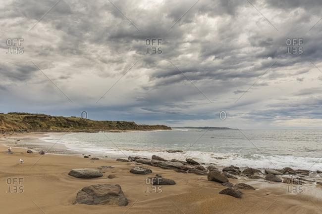 New Zealand- Oceania- South Island- Southland- Otara- Waipapa Point beach
