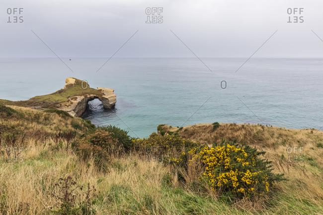 New Zealand- Oceania- South Island- Otago- Dunedin- Sandstone cliffs at Tunnel Beach