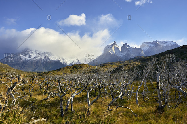 Chile- Ultima Esperanza Province- Scenic view of dead forest in Torres del Paine National Park