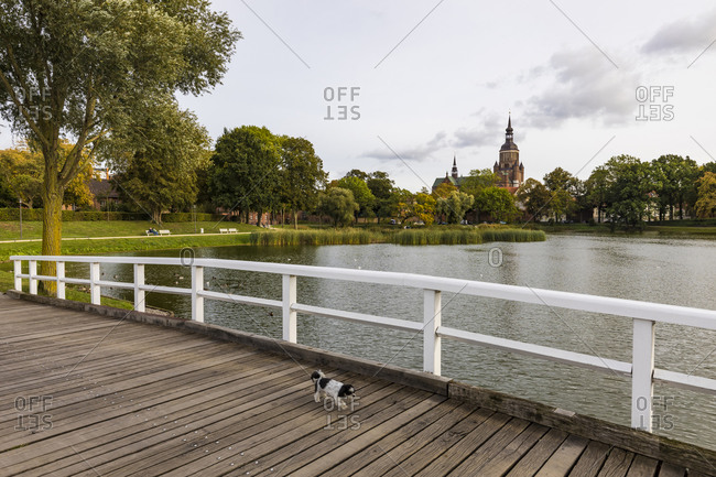 Germany- Mecklenburg-Western Pomerania- Stralsund- Dog walking across wooden bridge with Saint Mary's Church in background