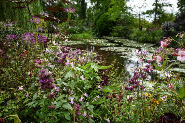 The water lily pond in the garden at the home of Claude Monet