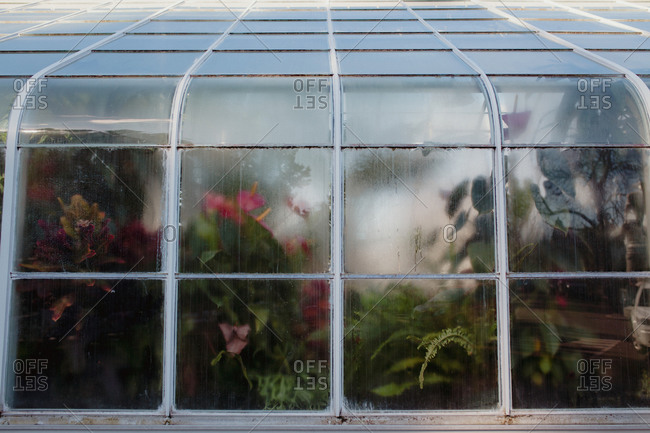 Foggy windows of a conservatory