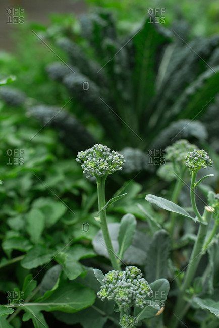 Close up of green plants growing in a garden