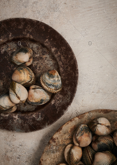 Fresh cockles on textured metal plates on a stone surface