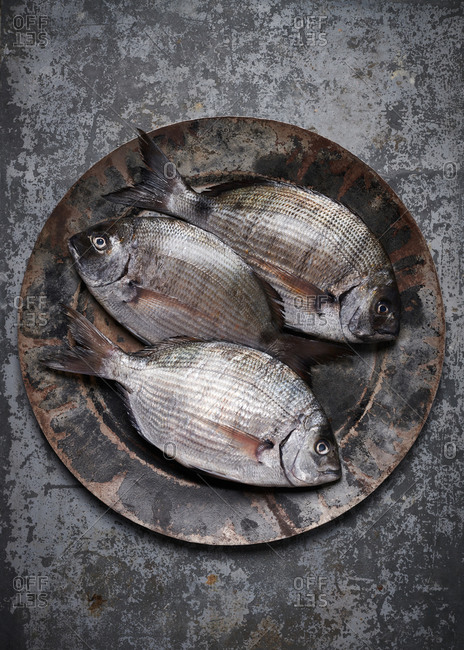 Three black seabream fish on a metal platter on a zinc metal surface