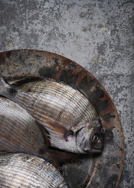 Black seabream fish on a textured metal platter on a zinc surface