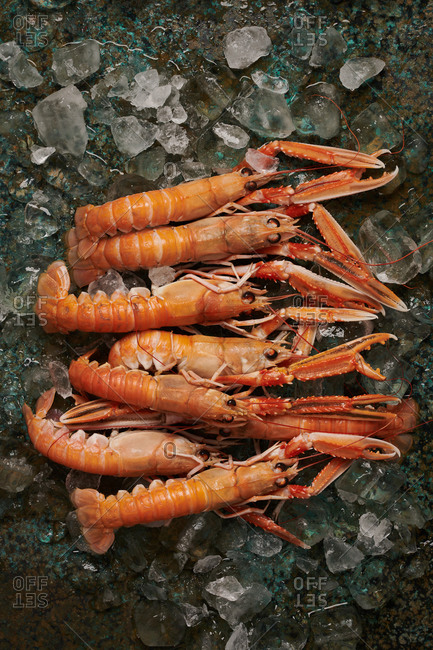Fresh Langoustine on an ice covered oxidized copper metal surface
